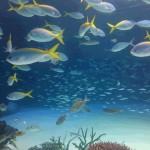 水族館(1)